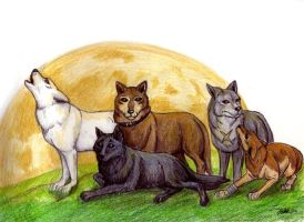 Wolf's Rain Cast by guardiansandi