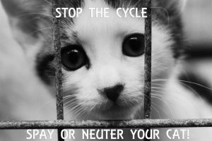 STOP THE CYCLE by SaphoPhotographics