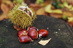 Autumn chestnuts by PhilsPictures