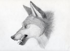 Angry Wolf Portrait by lucidcoyote