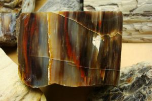 Petrified Wood Stock 37 by flufdrax