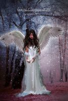 Winters Angel by SuzieKatz