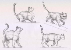 cat study by chasing-sandcastles