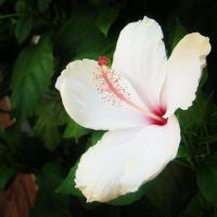 Beautiful Flower by Max-Pinch-Me-Please
