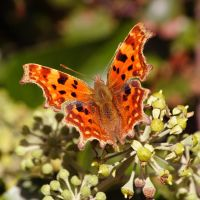 comma full stop by chillipope