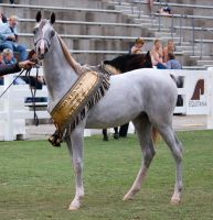 STOCK - Equitana 2013-348 by fillyrox