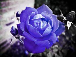 touch of blue by ukhan50699