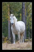 White Horse by Globaludodesign