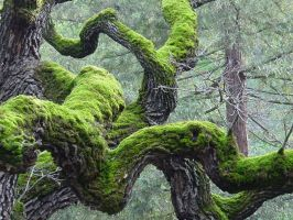 Twisted Tree and moss by dantecosplayer
