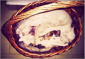 Sleeping Beauties in Basket by kyle007
