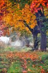 In the autumn day by tomsumartin