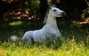 AMAZING PONEY by Aitor-michel