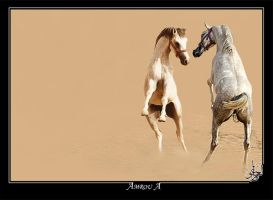 The chalange - Arabian horses by AMROU-A