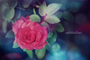 That which we call a rose... by Capere-Omnes