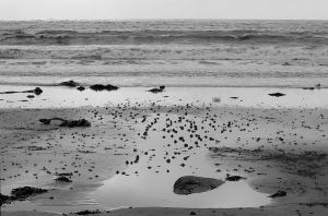 Sea sand and stone 7b by lichtie