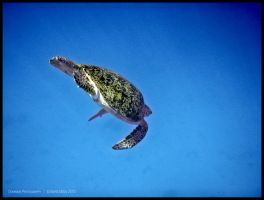 Dive, dive, dive by Dominion-Photography