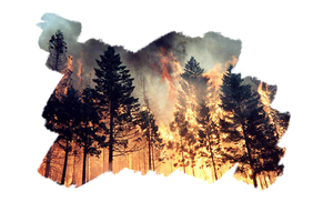 forest fire by flatlandq