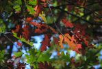 Fall weather by AriaGrill