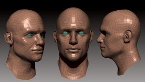 More head topology by Omar-Kamel
