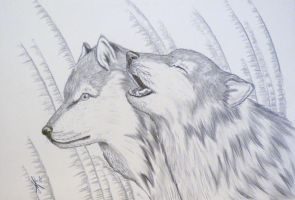 The Wolves by MiMitchell
