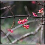 Late Blossoms by Clu-art