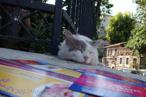 Street Cats:I am too lazy for work and travel ... by MuratGezer