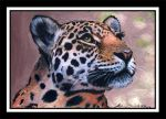 ACEO Leopard 1 by photospider