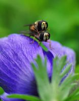 Naughty On Anemone by GiorgosMaravelakis