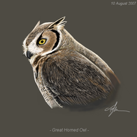 Great Horned Owl - Eremes by Shukura