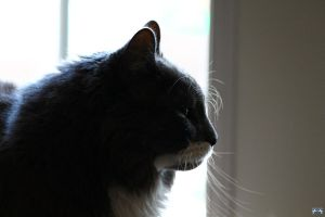 Beautiful Profile by LifeThroughALens84