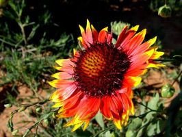 Flower 3 by todds201