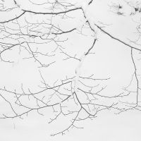 Entrelaced dead branches by yuushi01