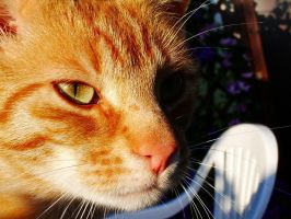 kot cat by noperson