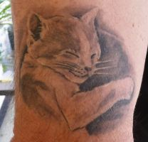kitty cat healed by hoviemon