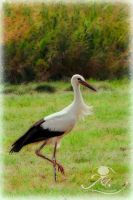 Stork profile by Usagi-Atemu-Tom