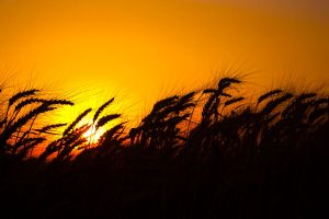 Golden Fields and Skies by JCill