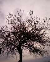tree I. by Nicollaos