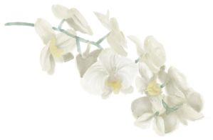 Orchids by RobynSmaleBeorg