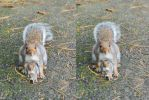 The Incredible Shrinking Squirrel Stereo by aegiandyad