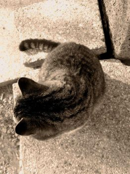 Sepia cat by Meireis