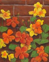 Nasturtium Wall by mbeckett
