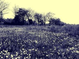 20120501 151105 by Fortitudinis