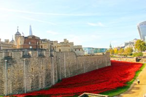 044-Sea Of Red Poppies by fantom125
