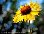 Once upon a sunny day... by Pixturesque