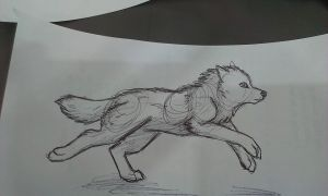 Running wolf sketch by nitalla
