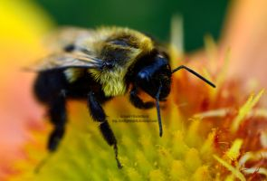Busy Bumble Bee by 8TwilightAngel8