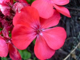 little pink flowers by catrina339