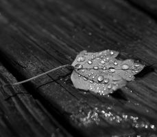 Water droplets on leaf by Keith-D