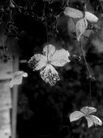BW flower by Jules-one