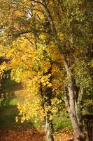 its fall again by janey89